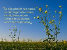 """""""Se não plantar não nasce, se não regar não cresce, se não amar, morre. Assim são as plantas, assim são as pessoas."""" #MensagensComAmor"""