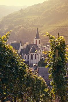 Traben- Trarbach, Germany (by {Miss Honey})