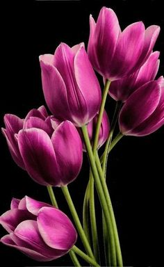 Justin Vo love flowers - My site Purple Tulips, Tulips Flowers, All Flowers, Exotic Flowers, Amazing Flowers, Spring Flowers, Planting Flowers, Beautiful Flowers, Natural Flowers Photos