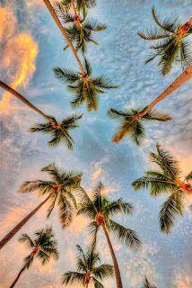 Las Fotos Mas Alucinantes: palmeras