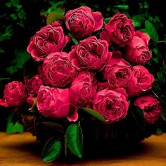 Basket of Red Roses Love Rose, Pretty Flowers, Pretty In Pink, Pink Flowers, Red Roses, Pink Peonies, Flower Quotes, Beautiful Roses, Floral Arrangements