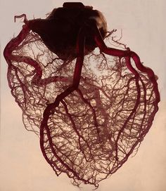 Very cool picture of the heart. They've stripped away everything leaving only the main coronaries (the three biggest arteries that encircle the heart like a crown) and it's branches and capillaries.