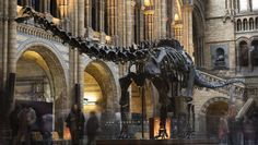 For 35 years, 'Dippy' the Diplodocus has been the most popular exhibit at the Natural History Museum in London.
