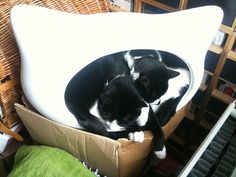 Two cats in a cat head bed