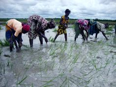 Ensuring water and food security takes centre stage at World Water Week 2012