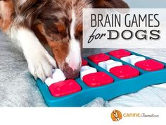 Agility Training For Dogs, Training Kit, Brain Training, Dog Agility, Training Your Dog, Sad Dog Stories, Free Training Programs, Brain Games For Dogs, Fun Brain