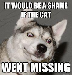 #Husky memes