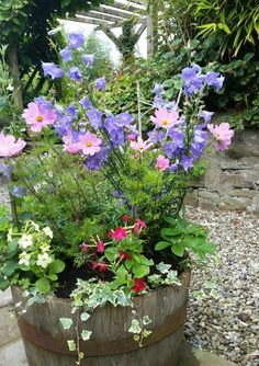 Cottage garden flowers ♡ Potted Plants, Garden Plants, Small Front Gardens, Kerb Appeal, English Country Gardens, Cottage Gardens, Garden Gates, Dream Garden, Naples