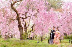 【植物園】桜 前撮り(07/12)