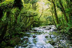 New Zealand, picture by Julian Sachtleben