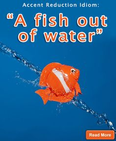 """""""A fish out of water"""" Accent Reduction Idioms: http://www.accentpros.com/2014/11/20/accent-reduction-animal-idioms-part-2/"""