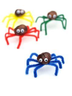 Araña de castaña