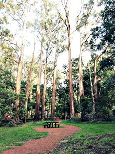 DANDENONG RANGES via 10 Best Road Trip Destinations from Melbourne You Will Regret Not Visiting | ladyironchef: Food & Travel
