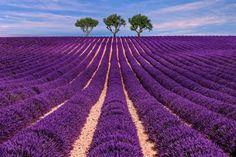 Kuyucak Köyü, Isparta Görsel bir şölen sunan mor lavanta tarlalarını görmek için ille de Fransa'nın meşhur Provence bölgesine gitmeniz şart değil! Isparta'nın Keçiborlu ilçesine bağlı Kuyucak köyü de, her yıl Haziran sonundan Ağustos başına kadar, lavanta tarlalarıyla görenlerin yüzünde gülücükler açmasına sebep oluyor