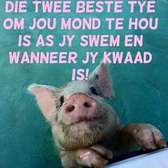 Die twee beste tye om jou mond te hou is as jy swem en wanneer jy kwaad is. Work Quotes, Cute Quotes, Funny Quotes, Uplifting Quotes, Positive Quotes, Afrikaanse Quotes, Special Words, Good Night Quotes, Twisted Humor