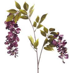 Pier One Faux Hanging Sweet Pea Stem - Purple ($4.38) ❤ liked on Polyvore featuring home, home decor, floral decor, fillers, flowers, backgrounds, nature, plants, flower home decor and purple home decor