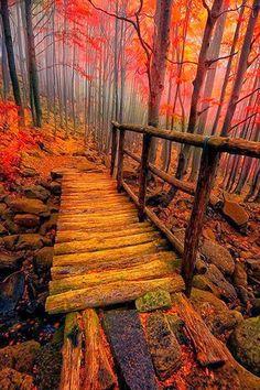 Forest Bridge - Italy  #pathways