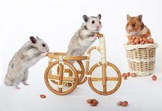 hamsters, by Елена Еремин