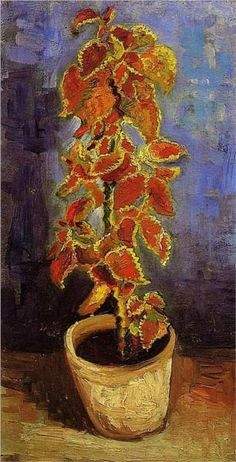 Coleus Plant in a Flowerpot, Vincent van Gogh, 1886    we have had this kind of plant in our home all the time when I was a kid.