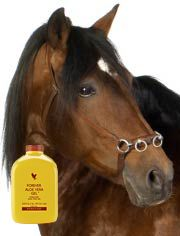 Keep your horse's coat, skin, and metabolism in tip top condition.