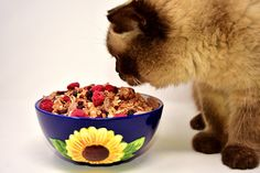 © Vegan Cat Food, Human Food For Cats, Organic Cat Food, Cat Food Brands, Best Cat Food, British Short Hair, Toxic Foods, Animal Nutrition, Cat Grooming