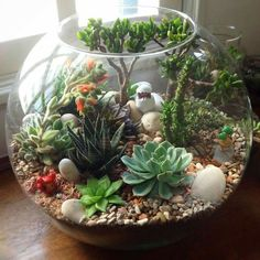 DIY Terrarium Succulents Picture Showing for Mini Succulents Garden Ideas DIY Succulent Plants - Garten Terrarium Design, Cactus Terrarium, Garden Terrarium, Terrarium Centerpiece, Glass Terrarium Ideas, Cacti Garden, Terrarium Wedding, Pokemon Terrarium, Small Terrarium