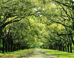 "Wormsloe Plantation, Georgia - Site of ""RUN FORREST, RUN!!!"" in Forrest Gump :)"