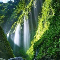 Cuaca panas begini ngadem di air terjun Madakaripura aja. Suasana yang sejuk dan pemandangan yang asri akan membuat kesan tersendiri  .  #trip #opentrip #bromo #bromokita #waterfall #amazing  #tourist #indonesia #holidays