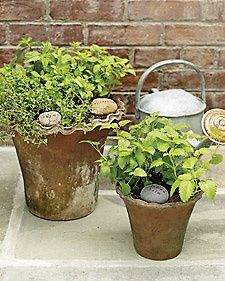 Natural Plant Markers - Martha Stewart Good Thingslabels on stones
