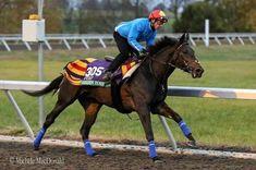 Golden Horn, Horse Racing, Race Horses, Horns, Animals, Training, Sport, Horn, Animales