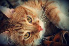 My cat Ninja by Krinna.deviantart.com on @deviantART