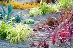Colorful Flower Combinations, Flower Combos, Gardening Landscaping, How to Landscape, Landscaping Tips for Beginners, Gardening, Gardening Hacks, How to Design Your Garden, Garden Designs, Gardening 101