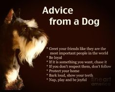 Schnauzer advice :)) All about dogs. Raza Schnauzer, Schnauzer Dogs, Miniature Schnauzer, Giant Schnauzer, Dachshund, I Love Dogs, Puppy Love, Cute Dogs, Awesome Dogs