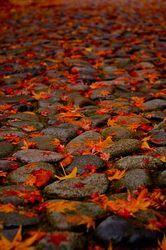 Ezt szeretem az őszben
