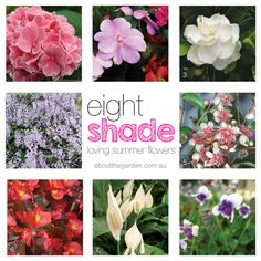 Lots of shade usually means you can have little colour in your garden, here are 8 shade loving summer flowers #aboutthegarden