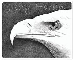 Bald Eagle II (2013) is an ink rendering of the most noble and intense bird but one of the most significant and beautiful