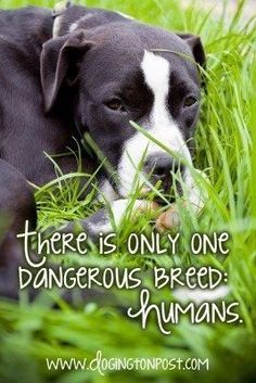 There is only one dangerous breed: humans. So true. Depends on how their raised so many are just big babies.