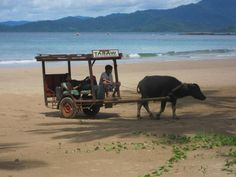 Local transport in Sabang, Philippines