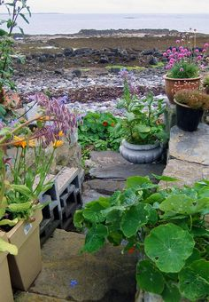 Beach Garden - The Port St Mary Allotment and the Hidden Gardens of Castletown