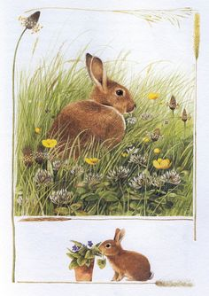 Just in time for Easter >>> Marjolein Bastin - Rabbits from 'Nature Sketches' Somebunny Loves You, Marjolein Bastin, Nature Sketch, Nature Artists, Rabbit Art, Bunny Rabbit, Bunny Art, Dutch Artists, China Painting