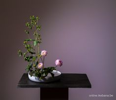 Ilse Beunen started recently with an online ikebana membership site with also some free content. Do you want to learn how to make this arrangement. Check out Online Ikebana for a free online class. Register and enjoy. https://free-online-ikebana.zenlearn.com #onlineikebana #いけばば #草月 #ikebana #sogetsu