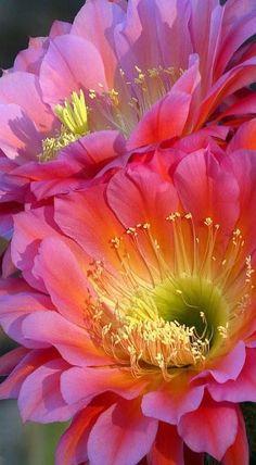 Des fleurs | flowers