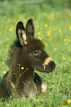 I will have donkeys one day!!(; So adorable!