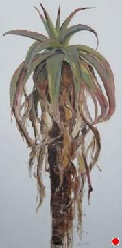 Aloe1-pink by Nicola Firth Oil ~ 1200 x 600