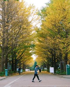 University of Tokyo in the Fall