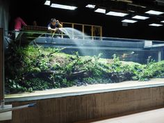 The Lisbon Aquarium monster tank 'Sunken Forest' by Takashi Amano — in the makinghttps://www.youtube.com/watch?v=bmQ3hTKajOA