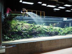 """The Lisbon Aquarium monster tank 'Sunken Forest' by Takashi Amano — in the making https://www.youtube.com/watch?v=bmQ3hTKajOA"""