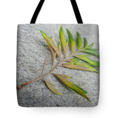 Grevillea Robusta Leaves Tote Bag by Kathleen Wong