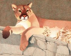 Impression Evergreen: Mountain Lion - Colored Pencil Drawing