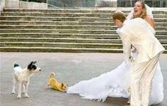 Animals To Weddings – 23 Pics